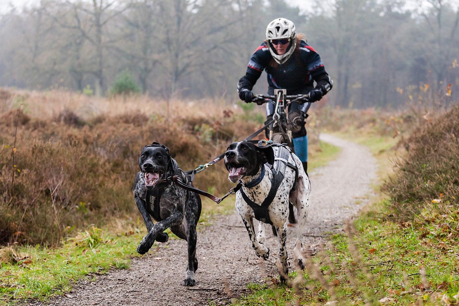 Dog Endurance / Canicross